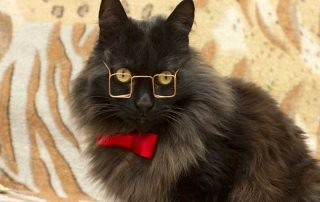 Gammel kat med briller