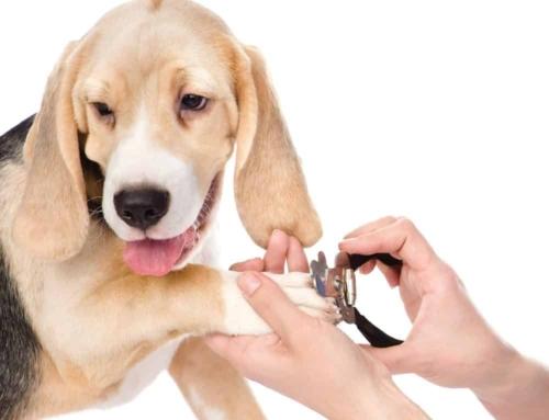 Negleklip på hunde