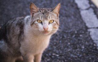 Herreløs kat