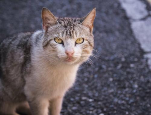 Herreløse katte i danmark